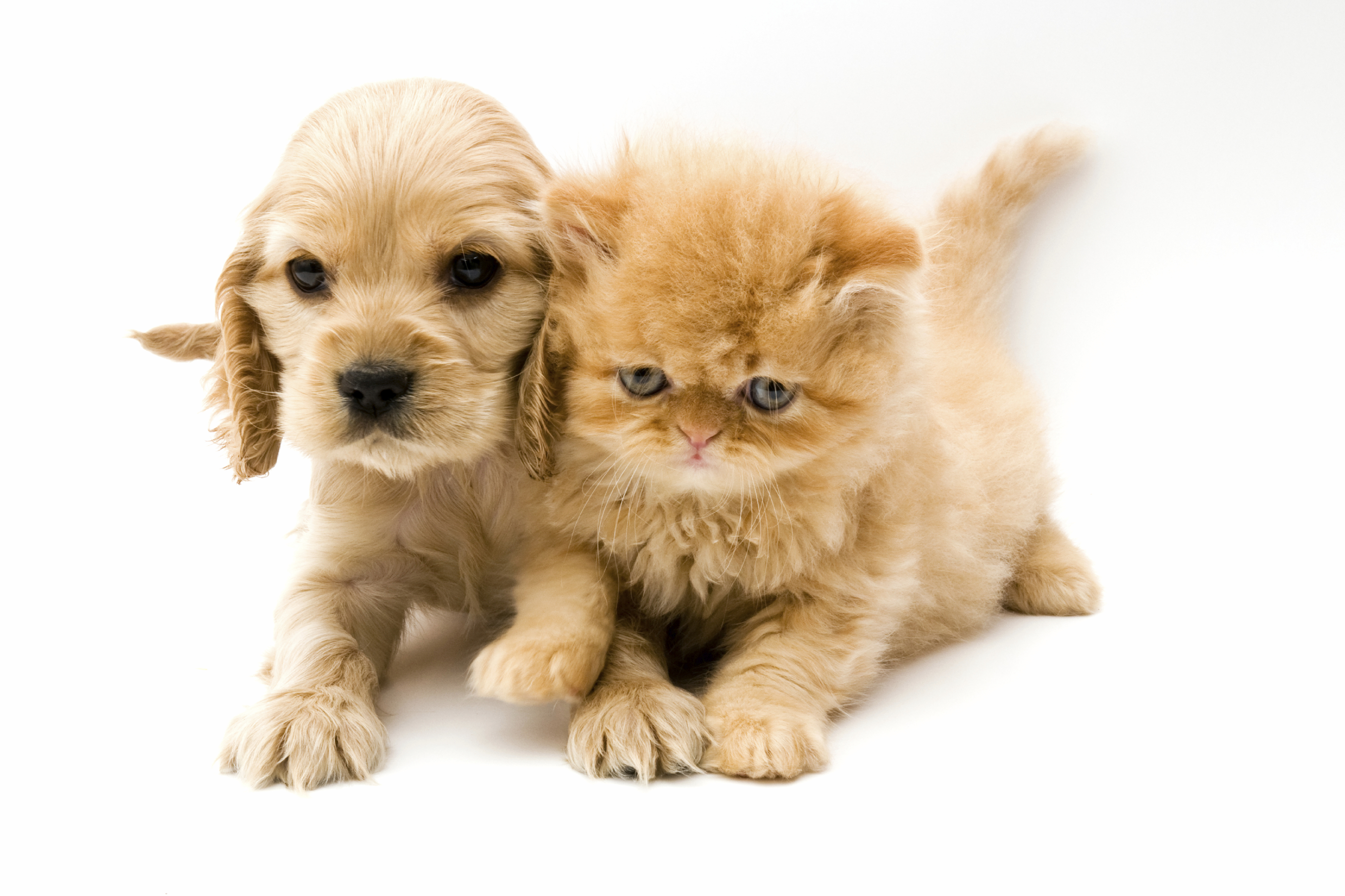 Pet Urine Removal In Carpets Amp Rugs Oakland County Mi
